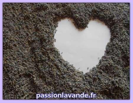 massage érotique la rochelle Champs-sur-Marne